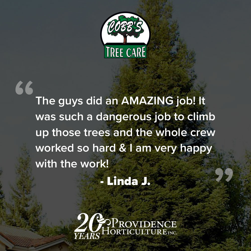 """The guys did an AMAZING job! It was such a dangerous job to climb up those trees and the whole crew worked so hard & I am very happy with the work!"" Linda J."