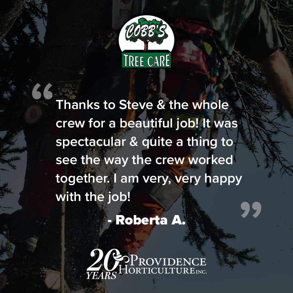 """""""Thanks to Steve & the whole crew for a beautiful job! It was spectacular & quite a thing to see the way the crew worked together. I am very, very happy with the job!"""" Roberta A."""