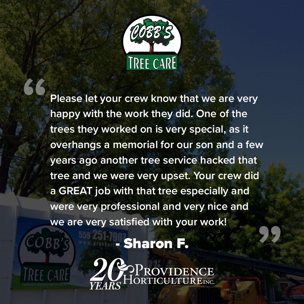 """Please let your crew know that we are very happy with the work they did. One of the trees they worked on is very special, as it overhangs a memorial for our son and a few years ago another tree service hacked that tree and we were very upset. Your crew did a GREAT job with that tree especially and were very professional and very nice and we are very satisfied with your work!""  Sharon F."