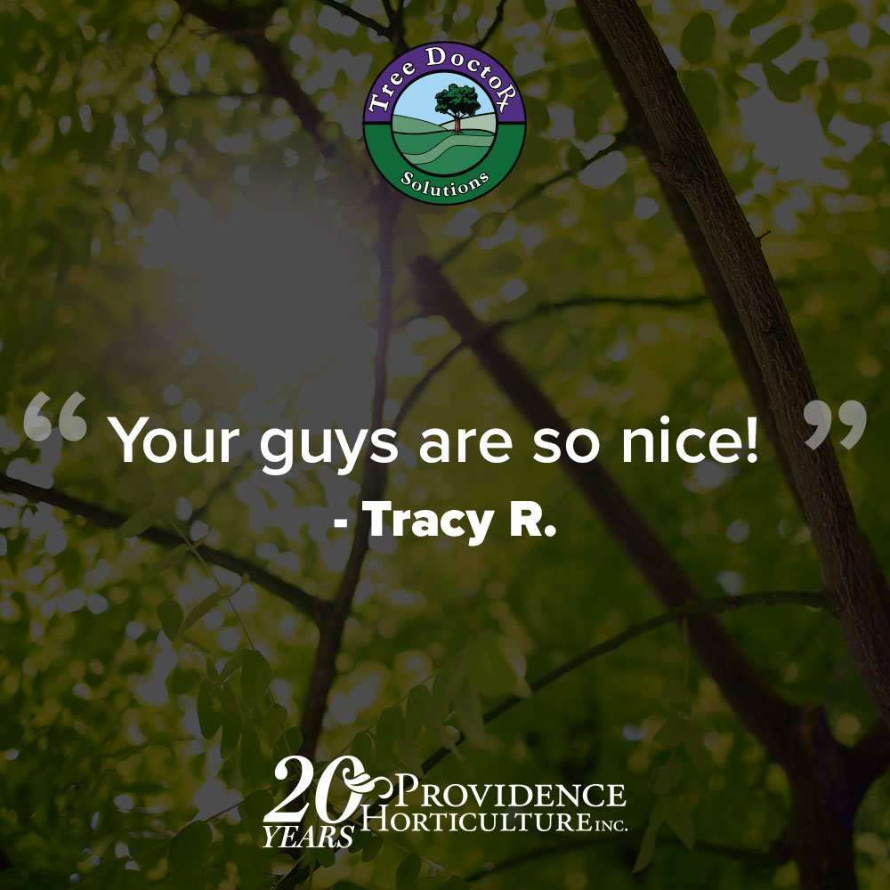"""Your guys are so nice!""  Tracy R."