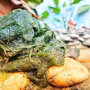 Aquatic Weed & Algae
