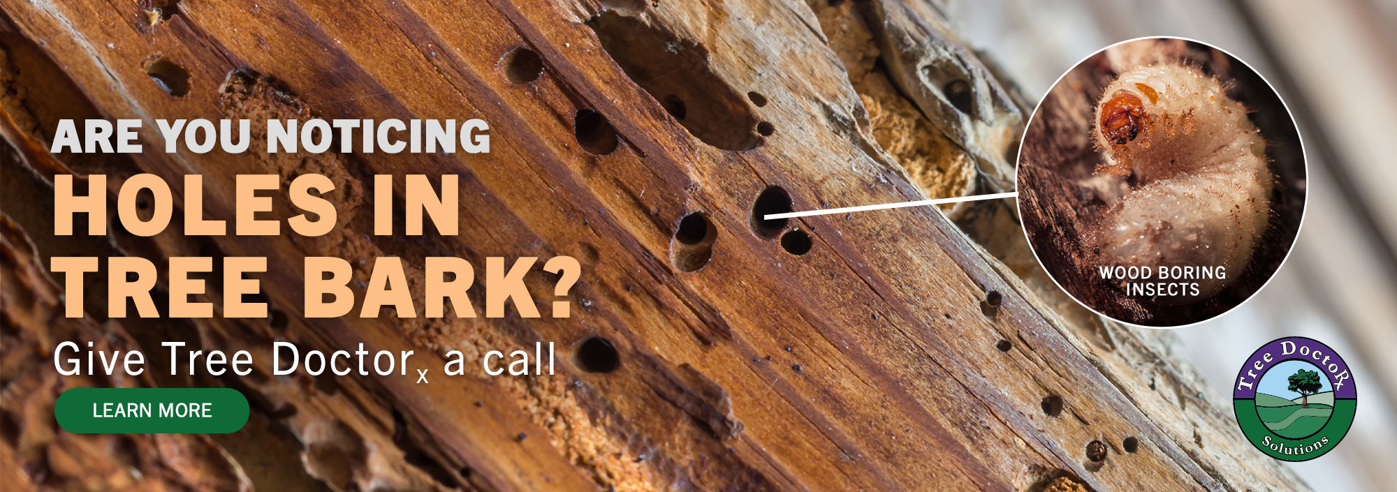 Are you noticing Holes in your tree bark?