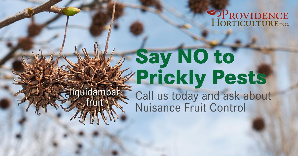Nuisance Fruit