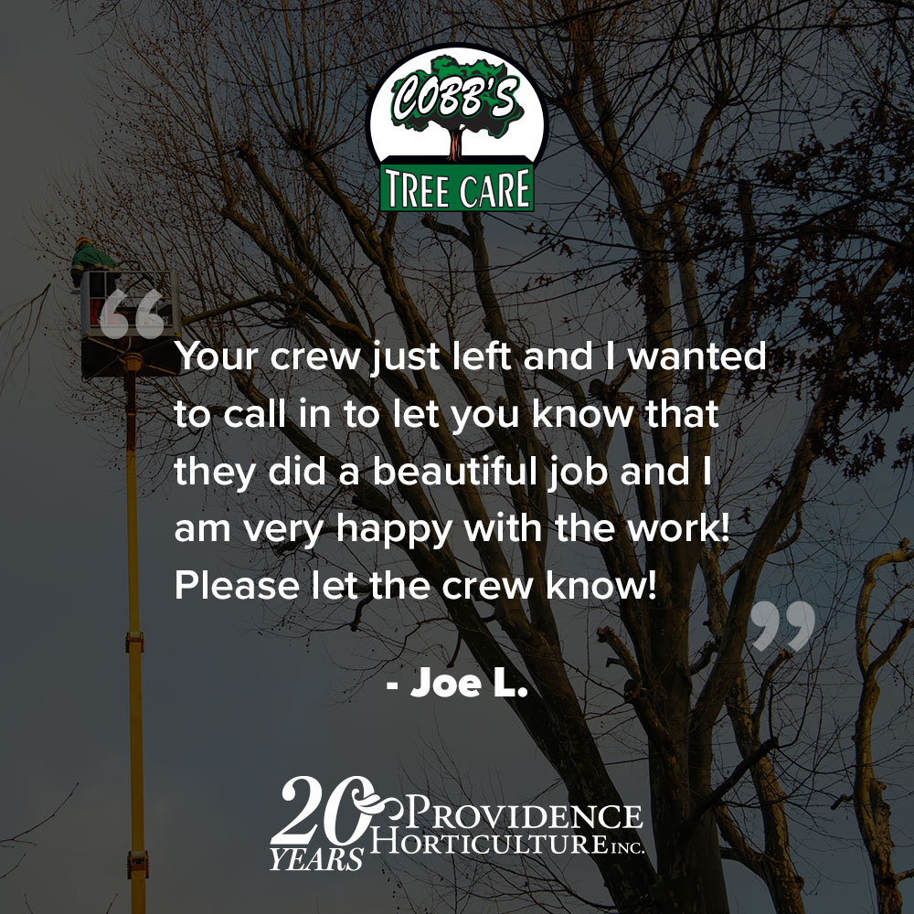 """""""Your crew just left and I wanted to call in to let you know that they did a beautiful job and I am very happy with the work! Please let the crew know!"""" Joe L."""